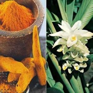 BioComplete Organic Turmeric Root Powder 2.2 oz jar