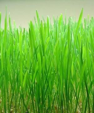 BioComplete Organic Wheatgrass Powder