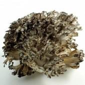 BioComplete Organic Maitake Mushroom Powder
