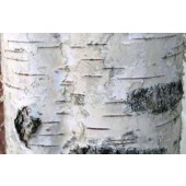 BioComplete Birch Bark Powder